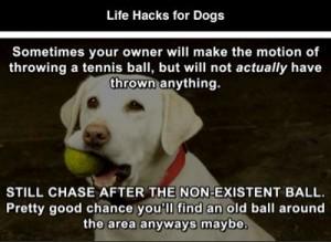 dog-lifehacks