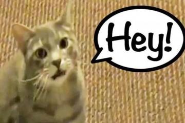 cat19may14-476850